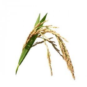 Рафинированное масло зародышей риса