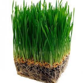 Рафінований батер зародків пшениці