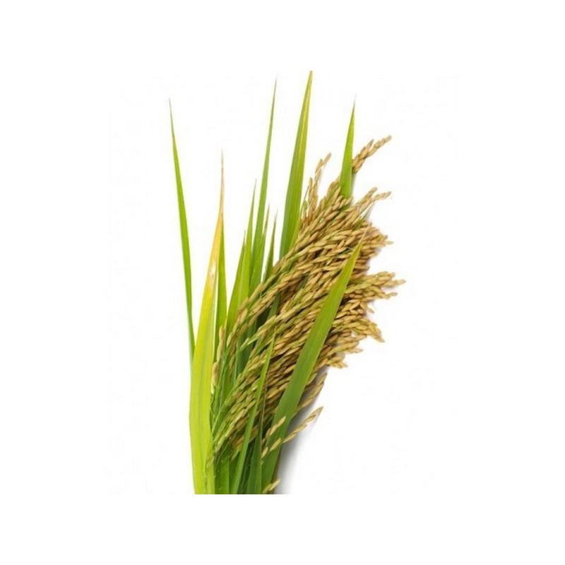 Пудра рисовая