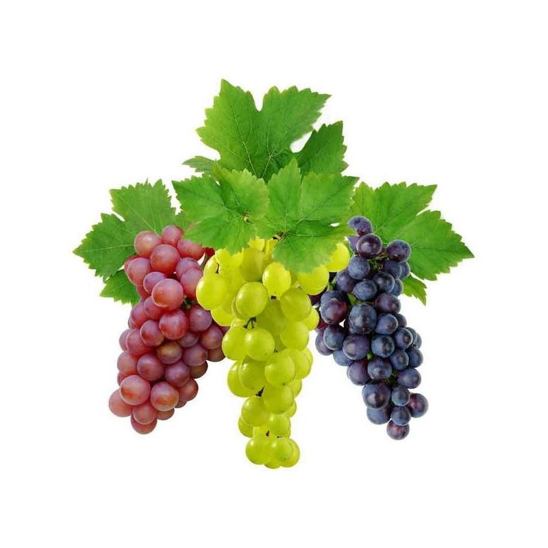 Виноград мускатель віддушка
