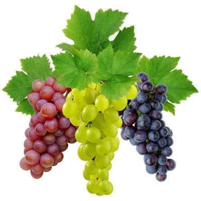 Виноград мускатель отдушка