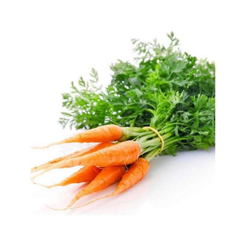 Нерафинированное масло семян моркови