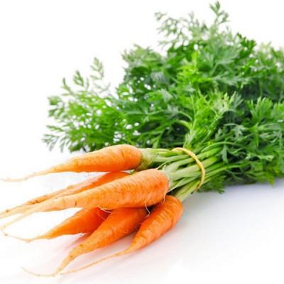 Нерафінована олія насіння моркви