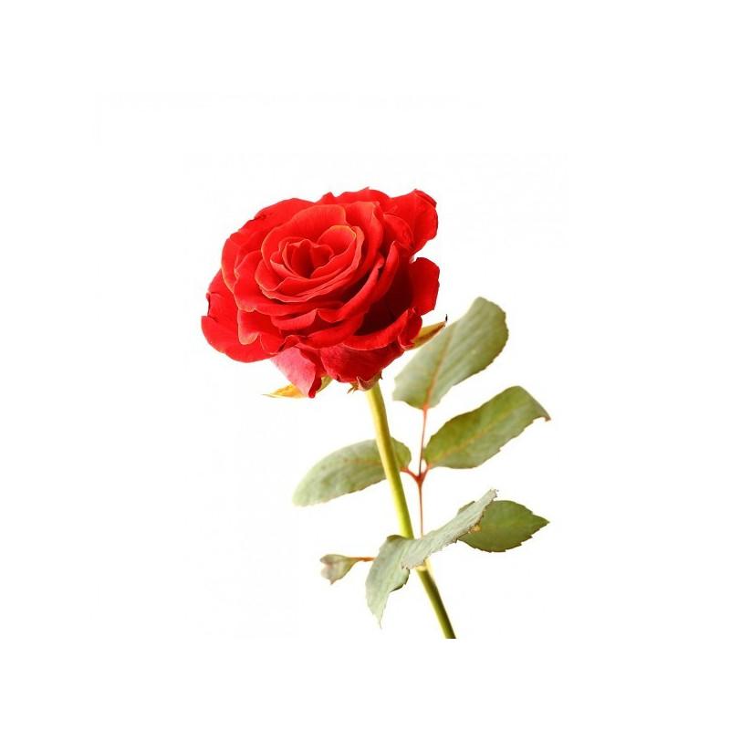 Аюрведична пудра троянди