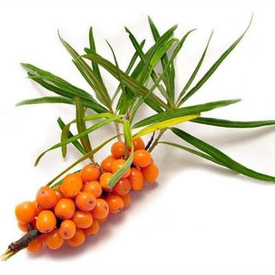 Нерафінована олія насіння обліпихи