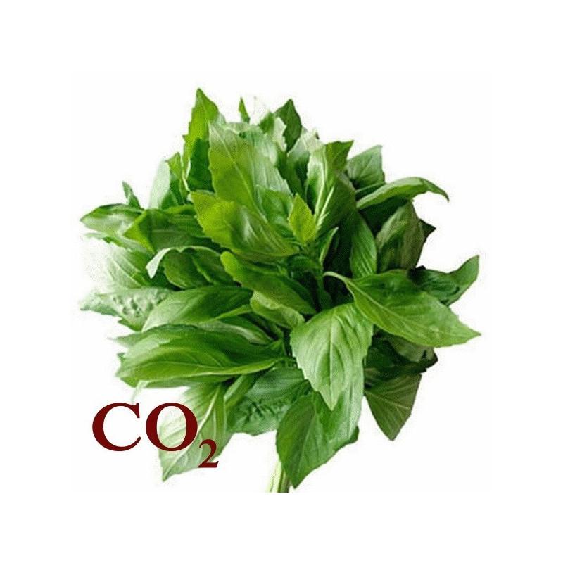 СО2-екстракт базиліку