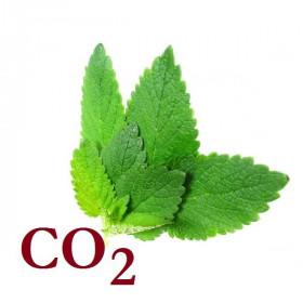 СО2-экстракт мелиссы