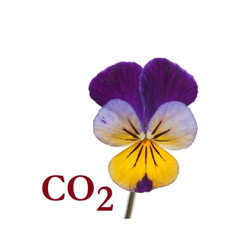 СО2-экстракт фиалки