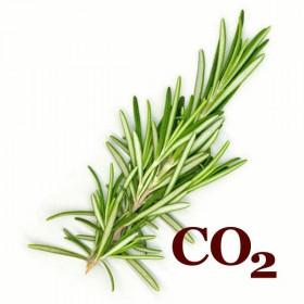 СО2-экстракт розмарина