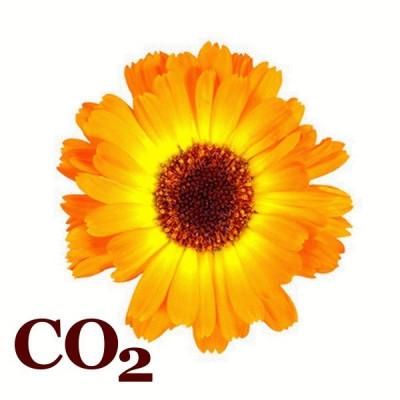 СО2-екстракт календули
