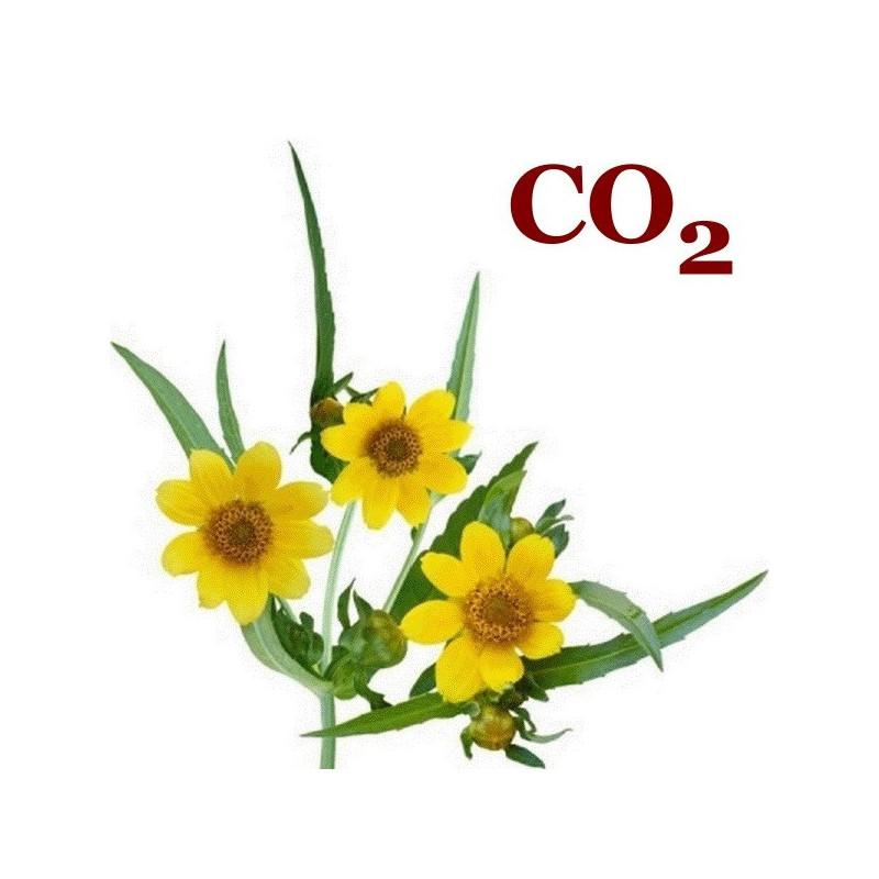 СО2-екстракт базиліка