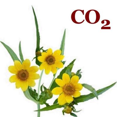 СО2-экстракт череды