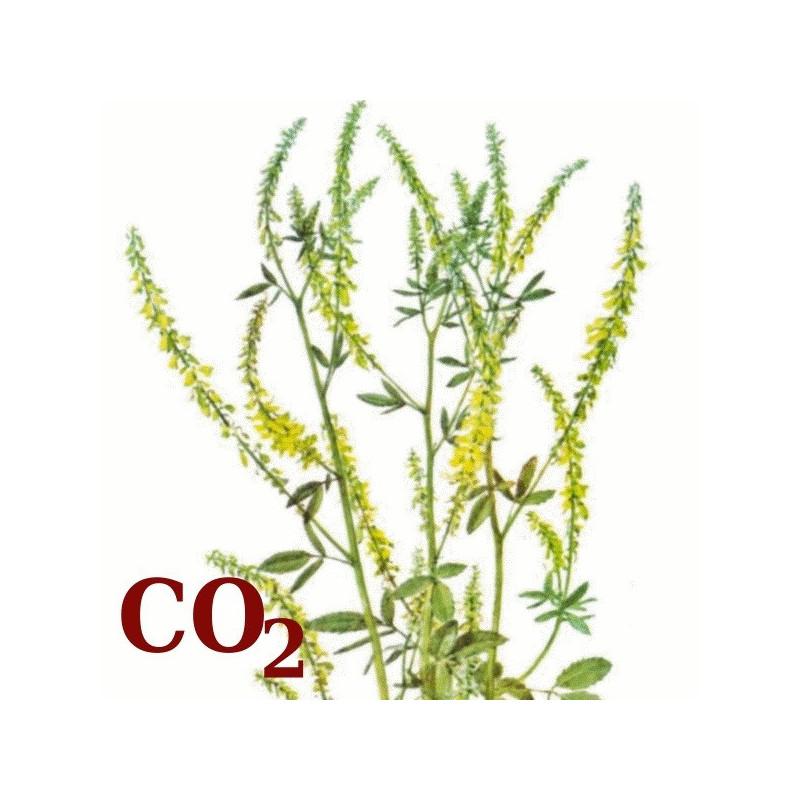 СО2-екстракт буркуну