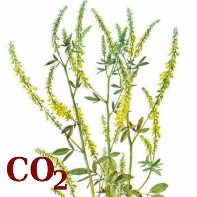 СО2-экстракт донника