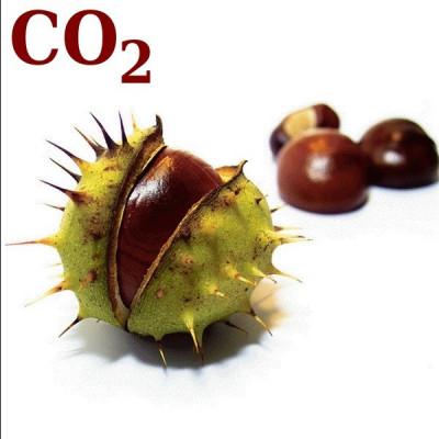 СО2-экстракт каштана