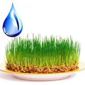 Водорозчинна олія зародків пшениці