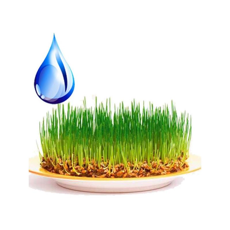 Водорастворимое масло зародышей пшеницы
