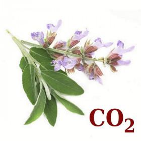 СО2-екстракт шавлії