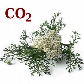 СО2-экстракт тысячелистника