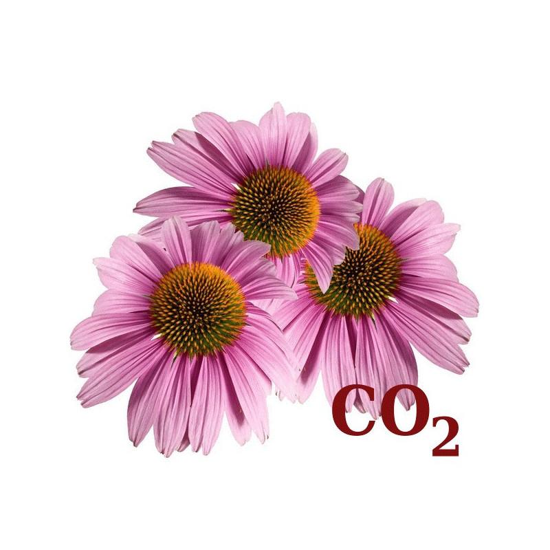 СО2-экстракт эхинацеи