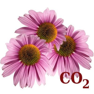 СО2-екстракт ехінацеї