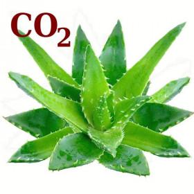 СО2-экстракт алоэ-вера