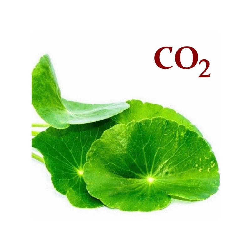 СО2-экстракт центеллы