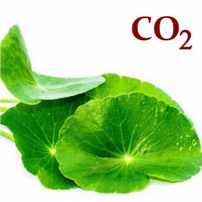 СО2-екстракт центели