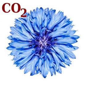 СО2-екстракт волошки