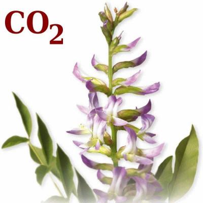 СО2-екстракт солодки кореня