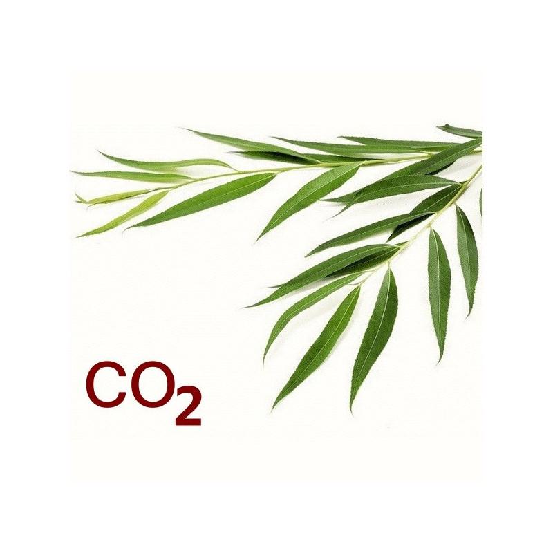 СО2-экстракт ивы