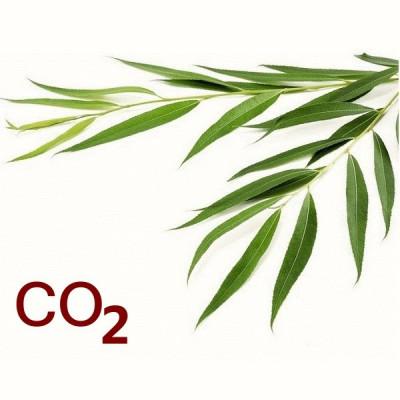 СО2-екстракт верби