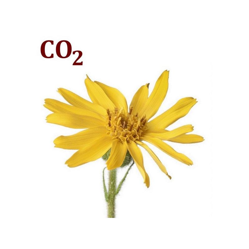 СО2-екстракт арніки