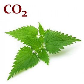 СО2-экстракт крапивы