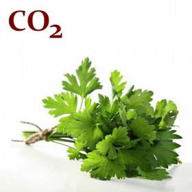 СО2-екстракт петрушки