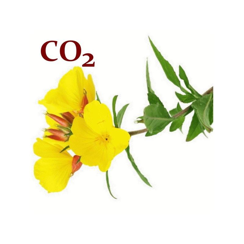 СО2-экстракт примулы вечерней