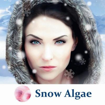 Порошок сніжної водорості Snow Algae