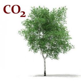 CO2-екстракт лубу берези
