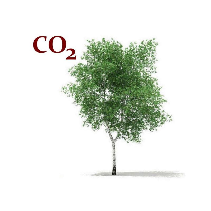СО2-екстракт лубу берези