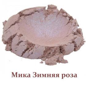 Міка пігментована Зимова троянда
