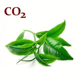 СО2-екстракт зеленого чаю
