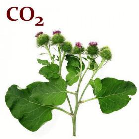 СО2-екстракт лопуха кореня