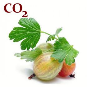 СО2-экстракт крыжовника