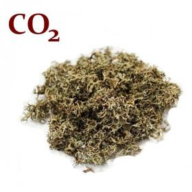 СО2-екстракт ісландського моху
