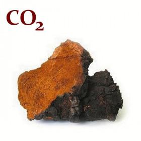 СО2-экстракт чаги
