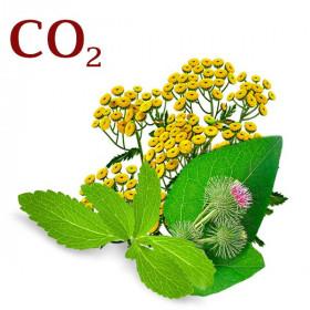 Комплекс СО2-экстрактов Контроль жирности волос