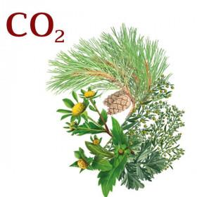 Комплекс СО2-екстрактів Від пітливості ніг протигрибковий