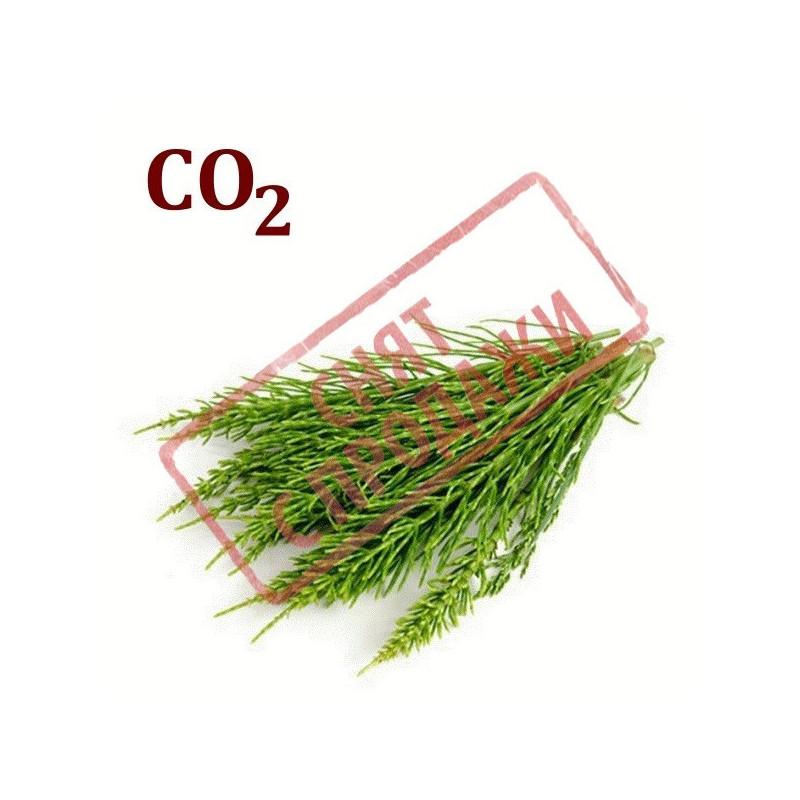 СО2-экстракт хвоща