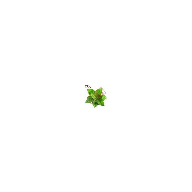 СО2-экстракт мяты перечной