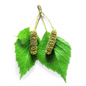 Березовых листьев гидролат